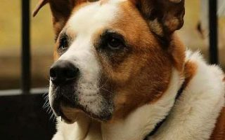 Peninsula Friends Of Animals A Cageless No Kill Non Profit