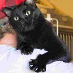 Ollie on John's shoulder - note the claws!