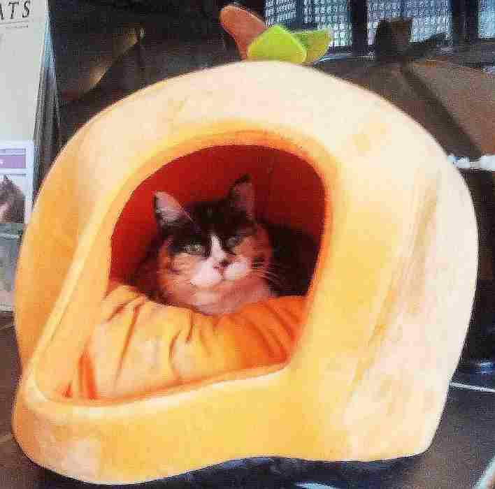 My Cool Pumpkin Bed!