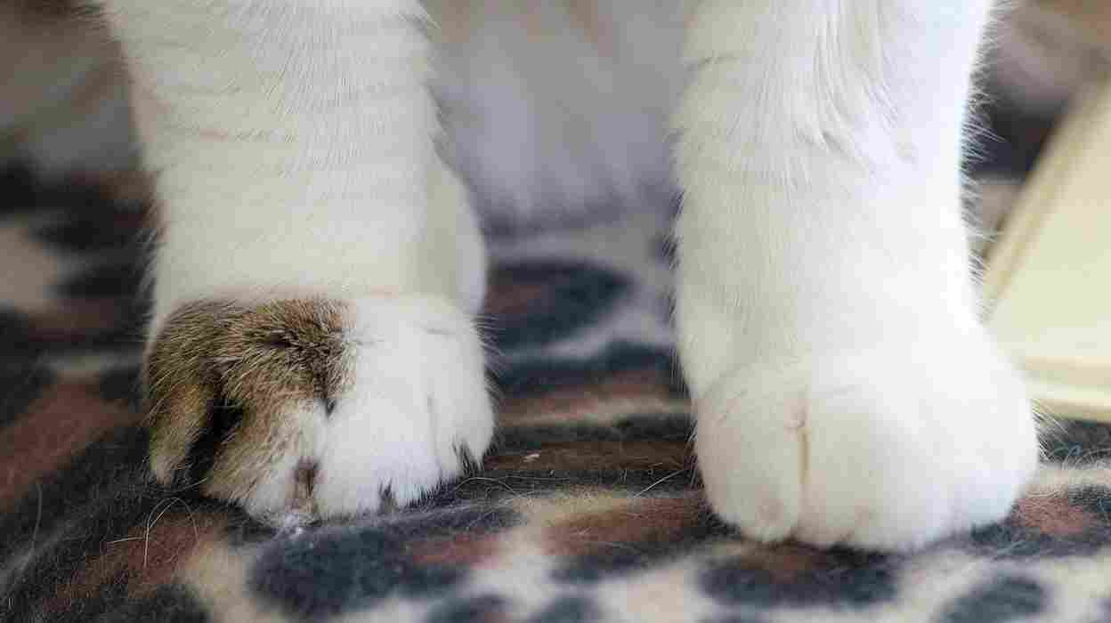 It's the right foot - not the all-white one