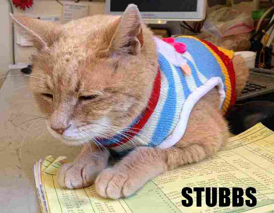 Mayor Stubbs the cat, photo by Marc-Andre Runcie-Unger/Flickr