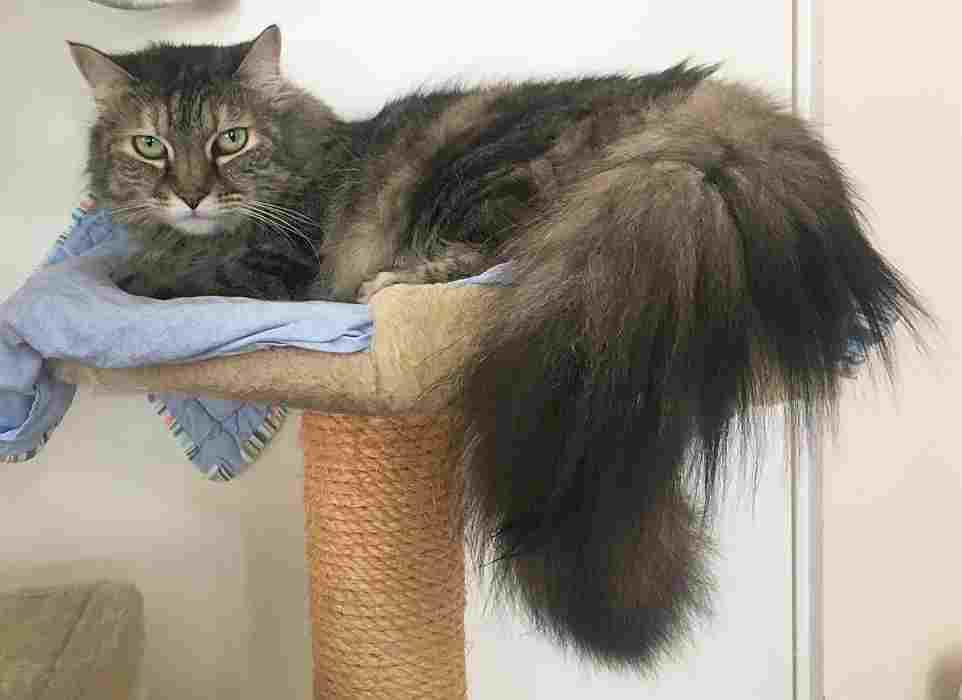 Zoe and her gorgeous tail