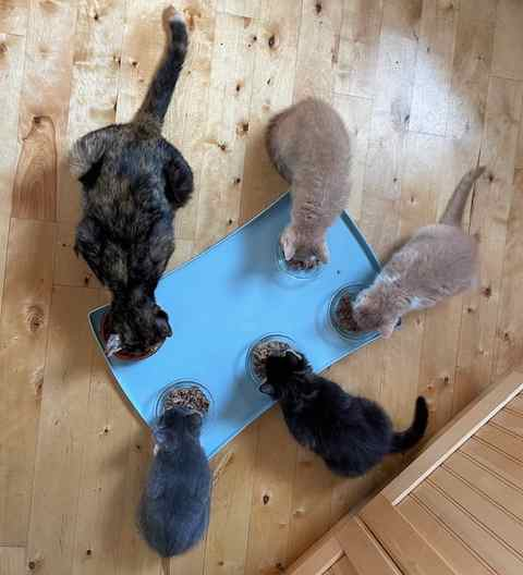 The kits feeding themselves